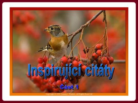 inspirujici_citaty_-_martha