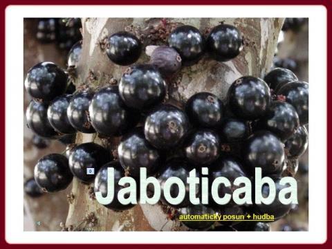 jaboticaba_sk