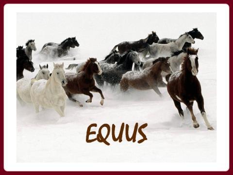 kone_-_equus_horses
