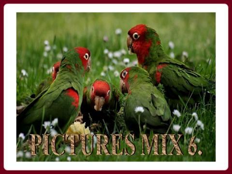 pictures_mix_-_ildy_6