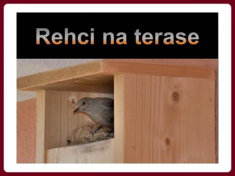 rehci_na_terase
