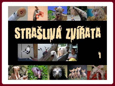strasliva_zvirata_1