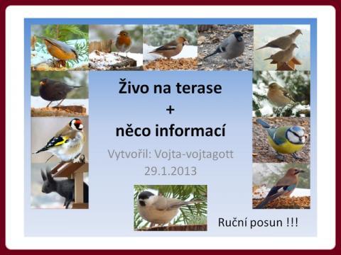 zivo_na_terase_-_vojta