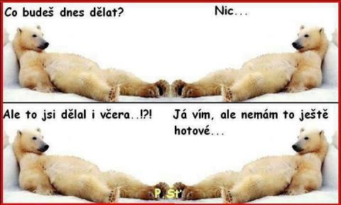 nic_ledni_medvedi