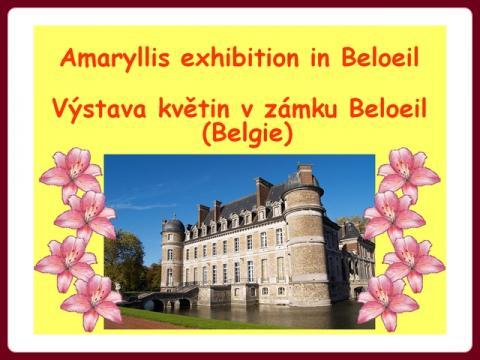 amaryllis_kastaslyban_cz
