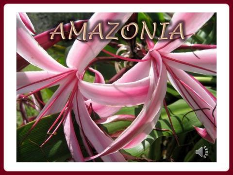 amazonia_magda