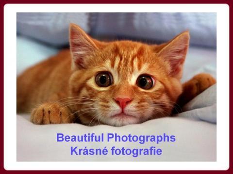 barevne_i_cernobile_fotky_-_photosblackandcolor