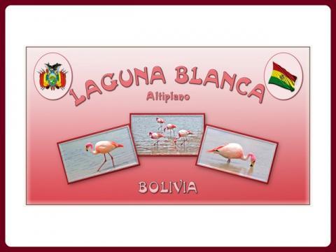 bolivia_laguna_blanca_-_steve