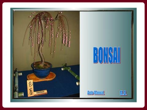 bonsaje_-_gmdobrov