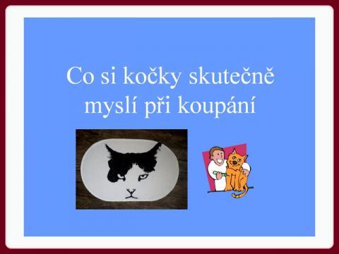 co_si_kocky_skutecne_mysli_pri_koupani