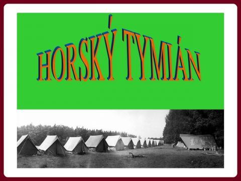 divoky_horsky_tymian_-_w_a