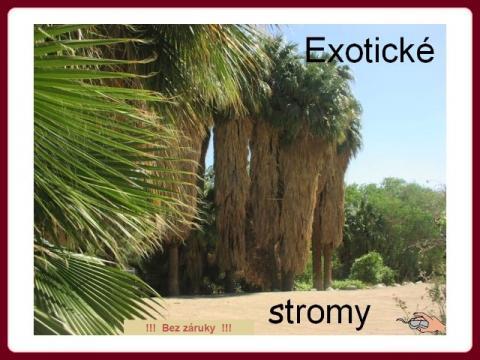 exoticke_stromy_cz