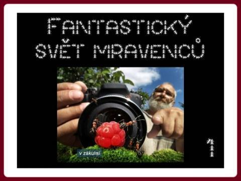 fantasticky_svet_mravencu_andrej_pavlov_1
