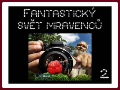 fantasticky_svet_mravencu_andrej_pavlov_2