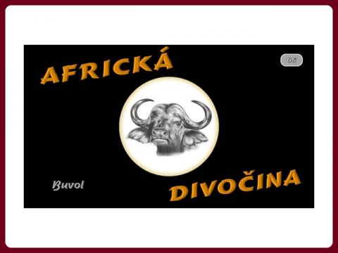 fauna_afriky_-_byvol_-_steve
