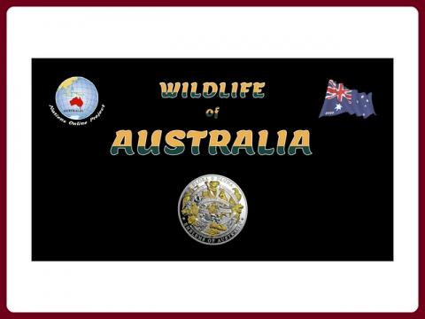 fauna_australie_-_steve_cz