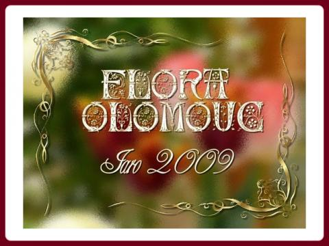 flora_olomouc_2009_-_marijakes