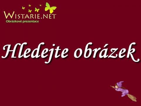 hledejte_obrazek_wistarie