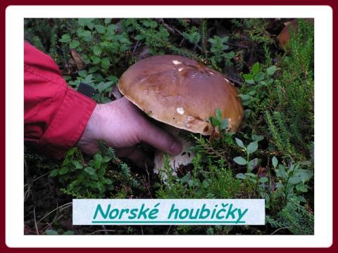houby_v_norsku