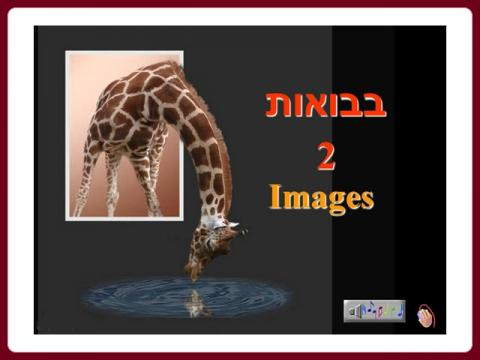 images_-_avior45_2