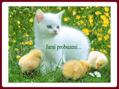 jarni_probuzeni_-_ilona