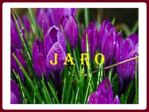 jaro_krokusy_-_yveta