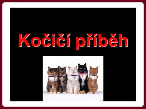 kocici_pribeh_-_cat_story
