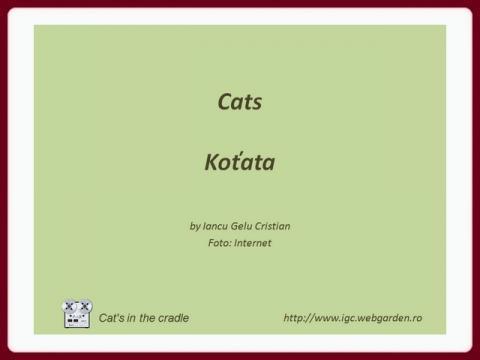 kotata_-_cats_igc