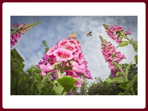 kralovska_zahradnicka_spolecnost_-_winner_photos_rhs