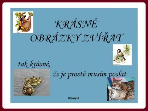 krasne_obrazky_zvirat_cz