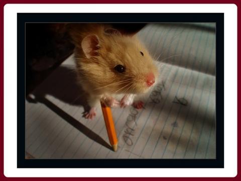 krecci_-_hamsters