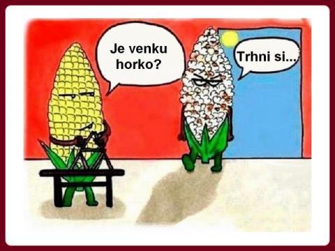 kukurice_v_lete_nahled
