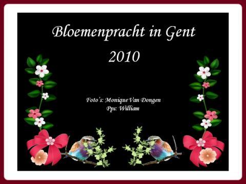 kvetinova_nadhera_bloemenpracht_gent