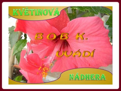 kvetinova_nadhera_bob
