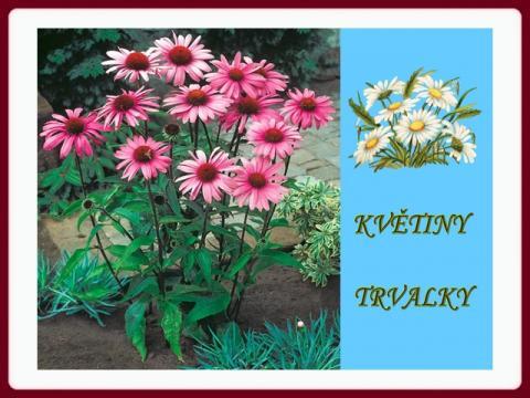 kvetiny_trvalky_m