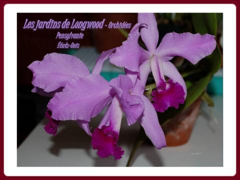 les_jardins_de_longwood_orchidees_helen