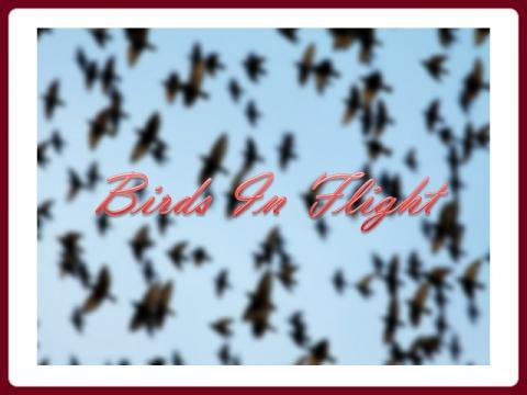 letici_ptaci_-_birds_in_flight_-_valimar_vm
