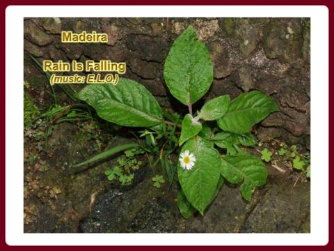 madeira_-_funchal_-_rain_is_falling_2009