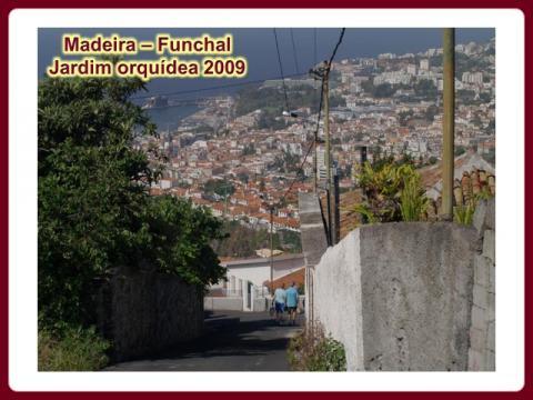 madeira_-_jardim_orquidea_2009