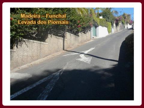 madeira_-_levada_dos_piornais_2009