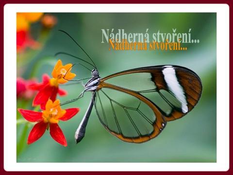 makrofotografie_-_nadherna_stvoreni