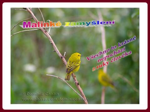 malinke_zamysleni_-_momentdereflexion_ptaci_a_kvet