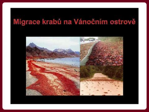 migrace_krabu_na_vanocnim_ostrove_-_mct