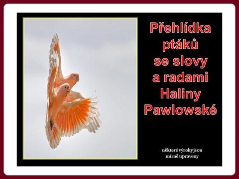 modni_prehlidka_ptaku_s_radami_haliny_pawlowske