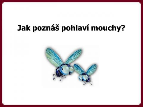 mouchy_-_spass24
