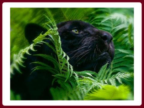 nadherna_zelen_renny_-_the_beauty_of_the_greenery