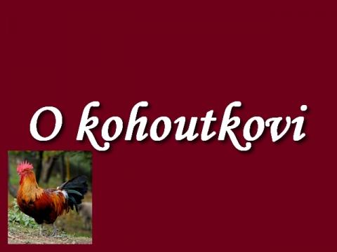o_kohoutkovi