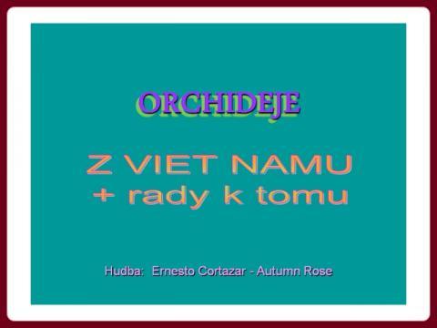 orchideje_a_rady_k_tomu