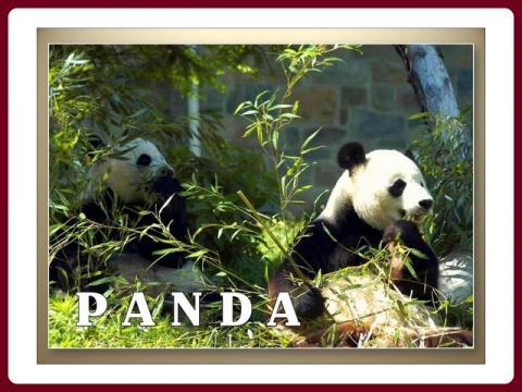 panda_-_yveta