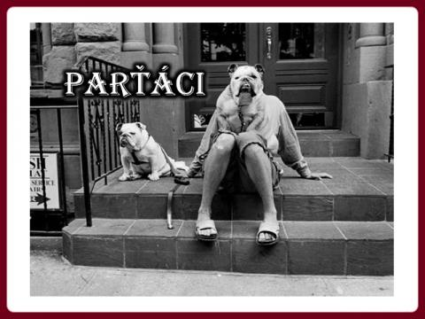 partaci_partners_susy
